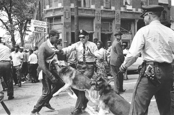 03.05.1963 Birmingham, Alabama. 17-letni aktywista ruchu praw obywatelskich atakowany przez psy policyjne.