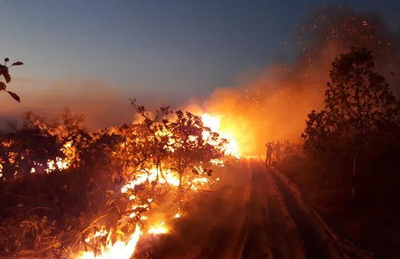 Pożary w Amazonii w tym roku wzrosły o 83 proc. w porównaniu  z tym samym okresem w 2018 r.